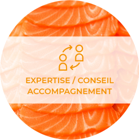 Expertise / Conseil / Accompagnement